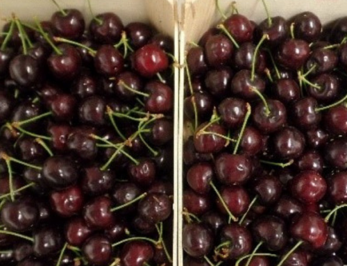Innovative Nanopack film extends cherries and bread shelf life by over 40%, latest tests show